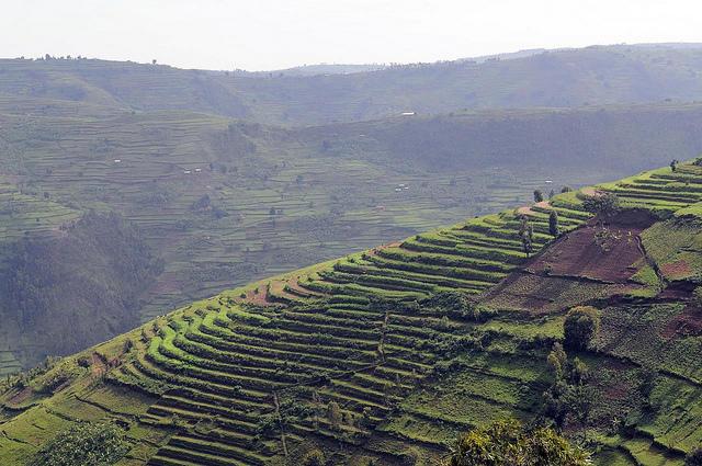 Rice terrasses © Neil Palmer