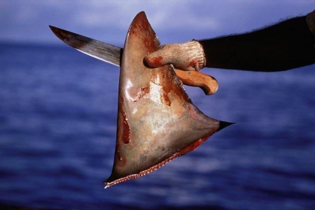 Shark-Fin.jpg